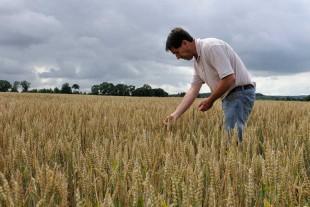 farmer checking crops in field