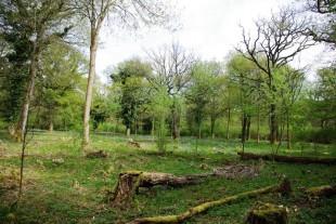 Woodland Improvement photo