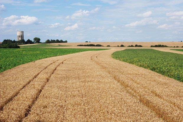 Landscape of strip field farming near Epworth in the Humberhead Levels