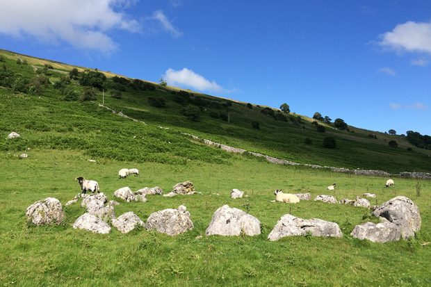 Sheep grazing on a grassy hill in Wharfedale in the Yorkshire Dales