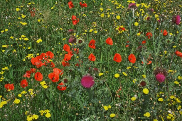 Wildflowers growing at the fields edge